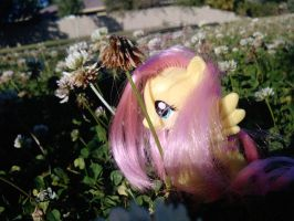 Fluttershy and flowers by Quacksquared