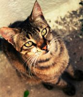 Greek stray cat by eline-w