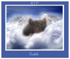 R.I.P my sweet baby rat. by GrotesquePuPPyMeow