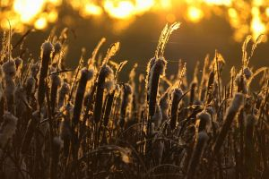 Sedge in the morning by s-ascic