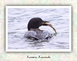 Loon Lunch by Merlinstouch