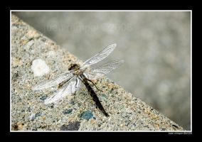 Oblique XIII: Dragonfly by NaujTheDragonfly