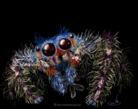 Jumping Spider by NadilynBeato