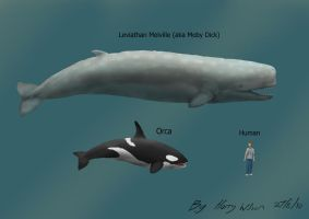 Leviathan Melvillei Size by Harry-the-Fox