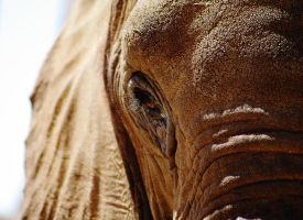 Elephant Eye by draconis42