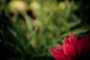 Edgy Flower by Deond3