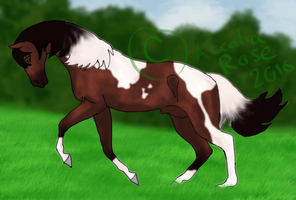SOLD -Adoptable Paso Fino by AccaliaRose