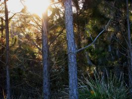 the pines by reciprocated