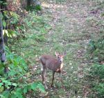 White Footed Whitetail by deerhunter2012