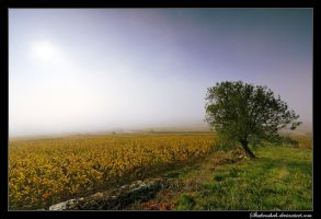 Misty Morning by Shahenshah