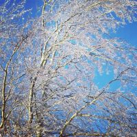 Winter Trees by GSxBB