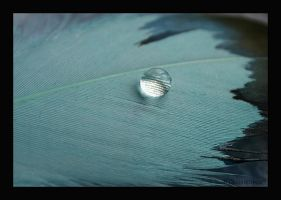 Water Drops by Paigesmum