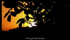 Through the leaves by Mart1-designs