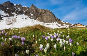 spring in the mountains by acoresjo88
