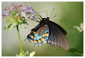 Hanging Butterfly by Cwen-Natulcien