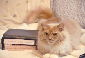 Cats and Books = Happiness by bridgetbright