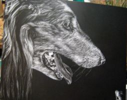 Rascal Scratchboard by LullaNonseSong