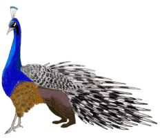 Peacock-porcupine griffin by Athenas-Owl