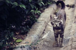 Stray Cats in Istanbul by M3LL0N-3M