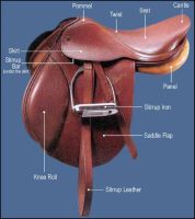 English saddle diagram by Equine-Help