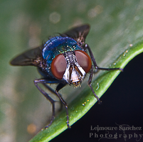 Housefly on the house 7 by lee-sutil