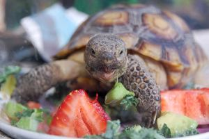 Hungry Tortoise by AnxietyPatient