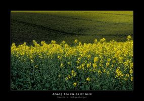 Among The Fields Of Gold by lostheart