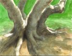 Fig Tree by DonIon