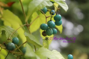 Blue Berries by Miss-Whoa-Back-Off