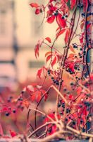 Autumn reds by ralucsernatoni