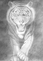 Tiger Pencil Drawing by leanne-27