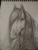 Andalusian Stallion by IfreakenLoveDrawing