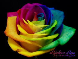 rainbow rose by SuteishiiJein