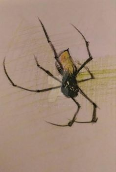 Spider by RM-Bouille