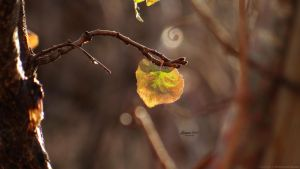 nature like a music note by MohannadQassab