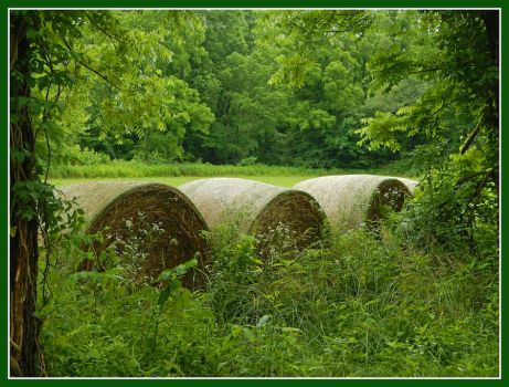 Hay bales. DSCN0183, with story by harrietsfriend
