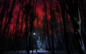 mysteriously frozen forest by 5-G