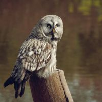 Owl by Interna
