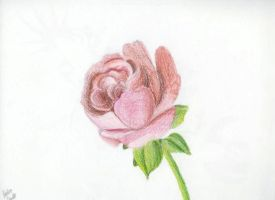 Rose by Master-Bryon