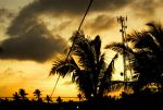 Palm Trees And Power Lines by deathbyexposure