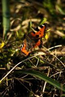 Butterfly by oscarhagbard