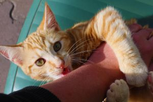 Never trust a cat that wants a belly rub by N-ScapePhotography