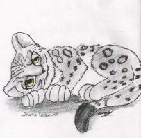 :cute snow leopard: by shadowundergroundgoh