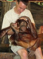 Orangutan Indonesia by BlackGryph0n
