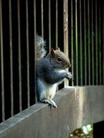 Squirrel Depressed By Small Nuts Threatens Suicide by aegiandyad