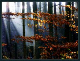 November forest II by Mittelfranke