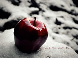 Red Apple in the White Snow by Phoenix315