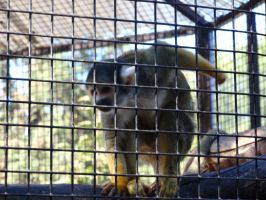 Folsom City Zoo Photo Series 5 by lilly-peacecraft