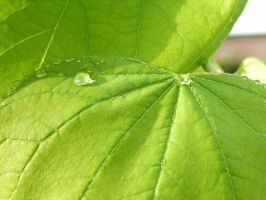 Leaf Drops by rougeux