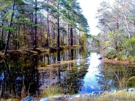 November reflection 2 by Joseph-W-Johns